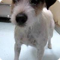 Adopt A Pet :: Ivy in Houston - Houston, TX