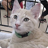 Adopt A Pet :: Alan Jackson - Vero Beach, FL