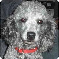 Adopt A Pet :: Casper - Rigaud, QC