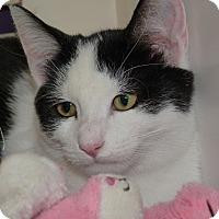 Adopt A Pet :: Katie - Stafford, VA