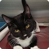Adopt A Pet :: Cotton - Tinton Falls, NJ