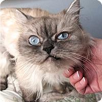 Adopt A Pet :: Delilah - Davis, CA