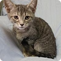 Adopt A Pet :: Fatima-sponsored - Leitchfield, KY