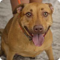 Adopt A Pet :: Gypsy - Albemarle, NC
