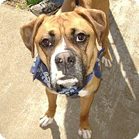 Adopt A Pet :: Max ADOPTED - Brentwood, TN