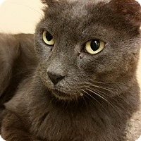Adopt A Pet :: Leroy - Clearwater, FL