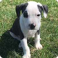 Adopt A Pet :: Kurt Von Trapp - Columbia, MD