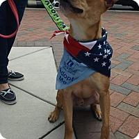 Adopt A Pet :: Carter - Columbia, MD