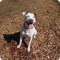 Adopt A Pet :: JASPER - McKinleyville, CA
