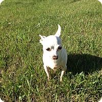 Adopt A Pet :: Cleo - Fargo, ND