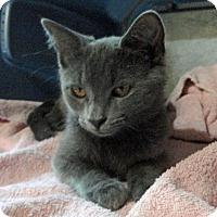 Adopt A Pet :: Darla - Troy, MI