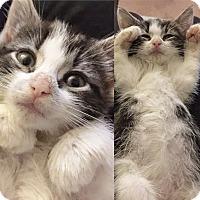 Adopt A Pet :: Eloise - Island Park, NY