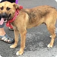 Adopt A Pet :: BOONDOCK - Albany, NY
