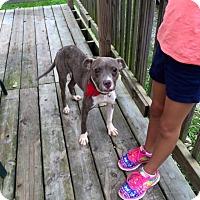 Adopt A Pet :: Princess - Kewanee, IL