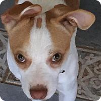 Adopt A Pet :: Alex (GA) - Atlanta, GA