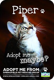 Domestic Shorthair Kitten for adoption in Jacksonville, Florida - Piper
