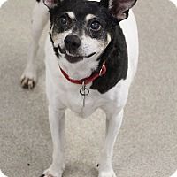 Terrier (Unknown Type, Small) Mix Dog for adoption in Manitowoc, Wisconsin - Zip