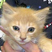 Adopt A Pet :: Betsy - Wildomar, CA