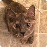 Adopt A Pet :: Stella & Luna - Richmond, VA