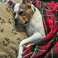 Adopt A Pet :: Scarlett - Suwanee, GA