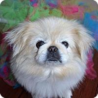 Adopt A Pet :: Nutmeg - Florence, KY