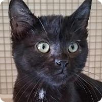 Adopt A Pet :: Holly - Colfax, IA