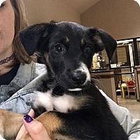 Adopt A Pet :: Tia - Austin, TX
