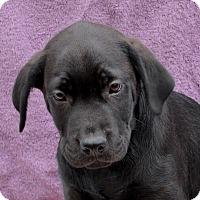 Adopt A Pet :: Ashford - East Sparta, OH