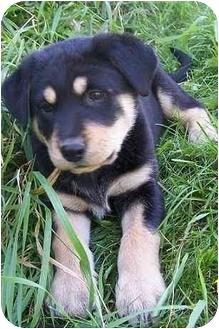 Dogs Spruce Grove Rescue