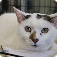 Adopt A Pet :: Deniz - Merrifield, VA