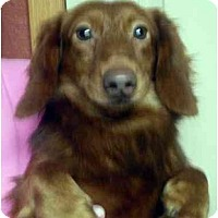 Adopt A Pet :: Gunner - Harrisburg, PA