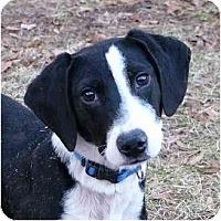 Adopt A Pet :: Eli - Mocksville, NC
