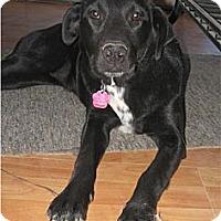 Adopt A Pet :: Abby - Golden Valley, AZ