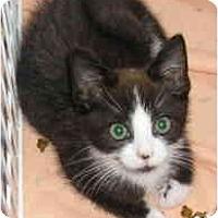 Adopt A Pet :: Maxwell - Island Park, NY