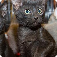 Adopt A Pet :: Carter - Irvine, CA