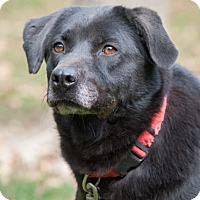 Adopt A Pet :: Fan - Salem, MA