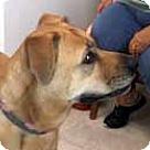 Adopt A Pet :: Minny