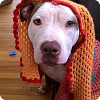 Adopt A Pet :: Emeline - Newtown, CT