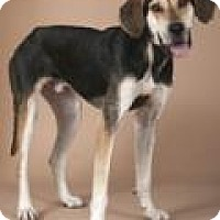 Adopt A Pet :: Big Foot - Chicago, IL