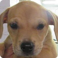 Adopt A Pet :: Roxie - Lincolnton, NC