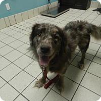 Adopt A Pet :: Mo Rocca - Jersey City, NJ