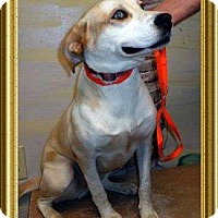 Adopt A Pet :: HOLLY - Metairie, LA