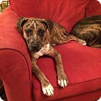 Adopt A Pet :: Sonny Liston - PORTLAND, ME