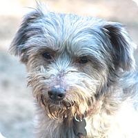Adopt A Pet :: Fiona - Norwalk, CT