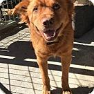 Adopt A Pet :: Yuna