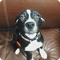 Adopt A Pet :: Hallie - Long Beach, NY