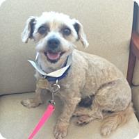 Adopt A Pet :: Valentina - Oak Ridge, NJ