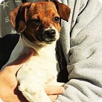 Adopt A Pet :: Jasmine - Joplin, MO