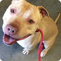 Adopt A Pet :: Rocky - NO ADOPTION FEE! - Corning, CA