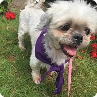 Adopt A Pet :: Renee - Detroit, MI